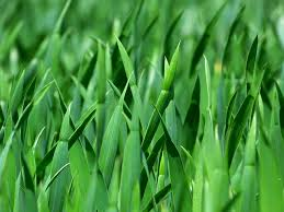 Blades of Green Scholarship